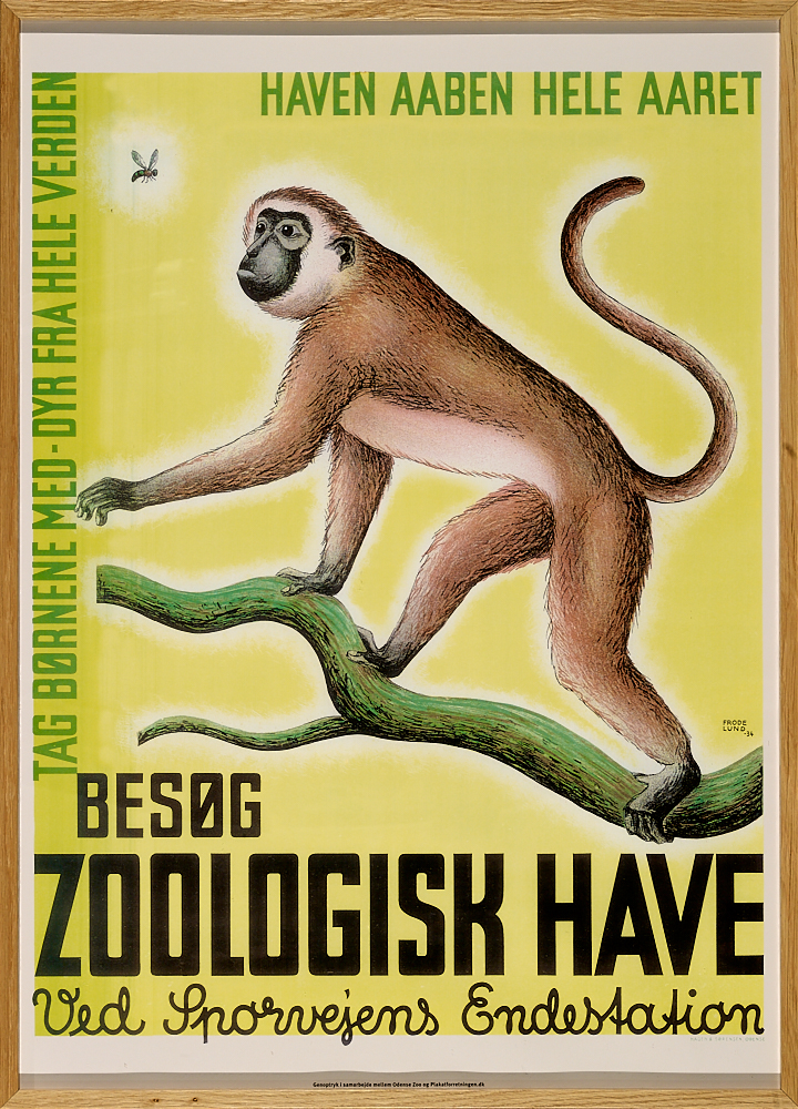 Zoologisk Have - Odense Zoo - Abe